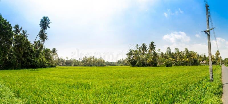 Reisfeld in der Sri Lanka Panoramaansicht stockfotos
