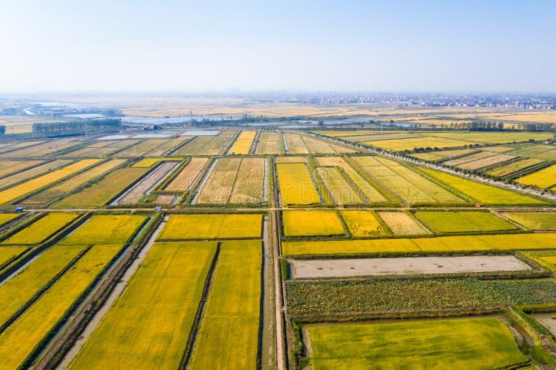 Reisfeld im Herbst stockfotografie