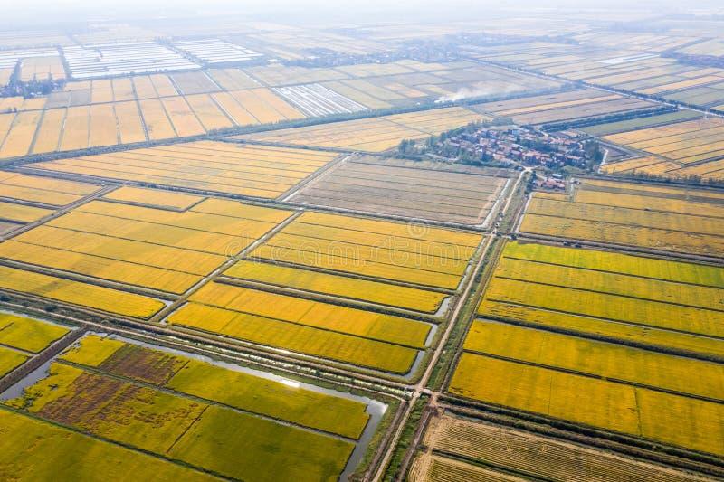 Reisfeld im Herbst lizenzfreies stockbild