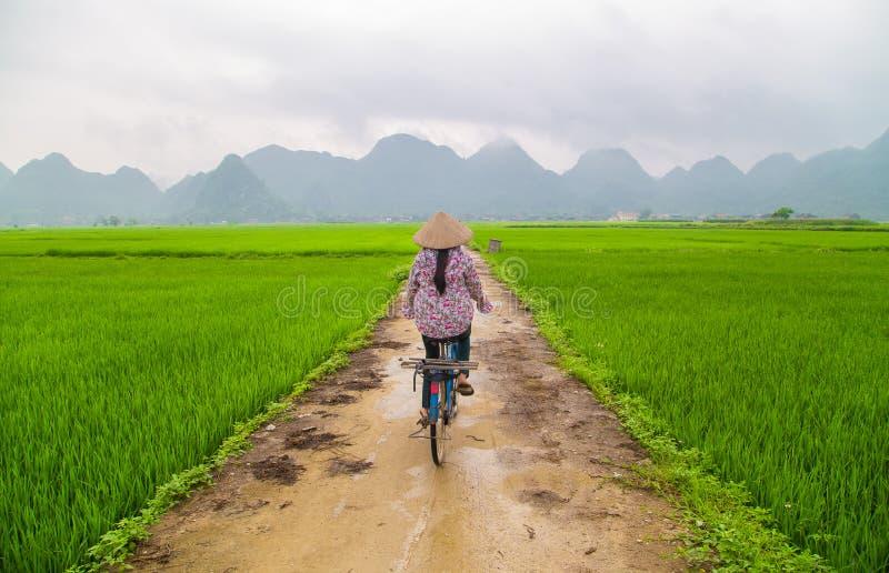 Reisfeld im Tal herum mit Bergpanoramaansicht in Bac Son-Tal, Lang Son, Vietnam lizenzfreies stockfoto