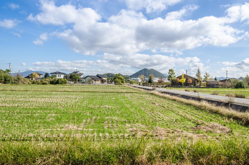 Reisfeld in Japan nach havest Zeit lizenzfreie stockfotos