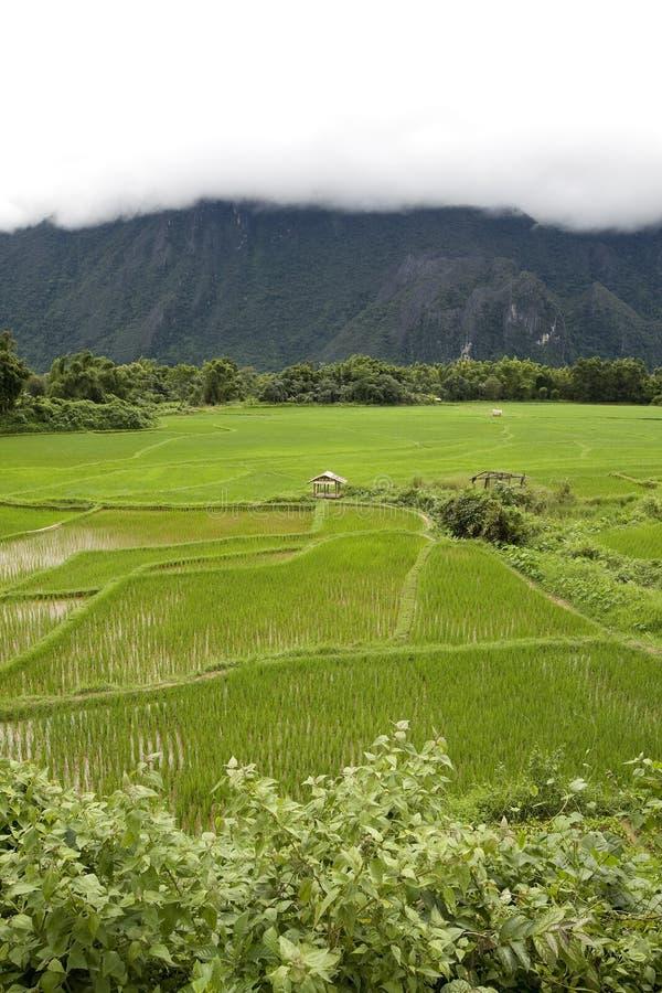 Reisfeld in Laos lizenzfreie stockfotografie
