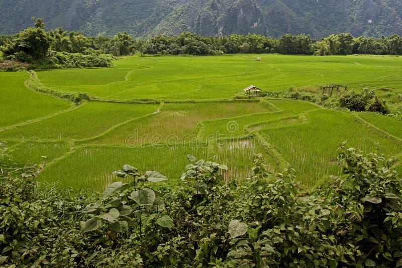 Reisfeld in Laos, Vang Vieng lizenzfreie stockbilder