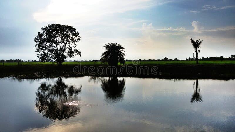 Reisfeld mit See in der Dunkelheit stockfotos