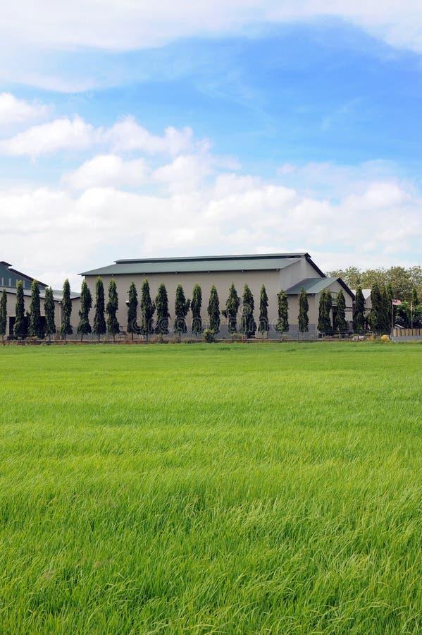 Reisfeld und -fabrik stockbilder