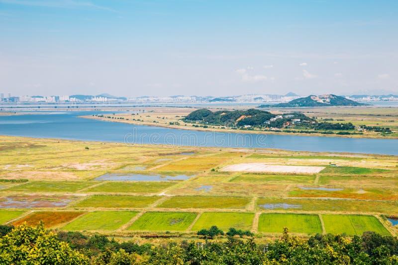 Reisfeld und Meer in Daebudo, Ansan, Korea stockbilder