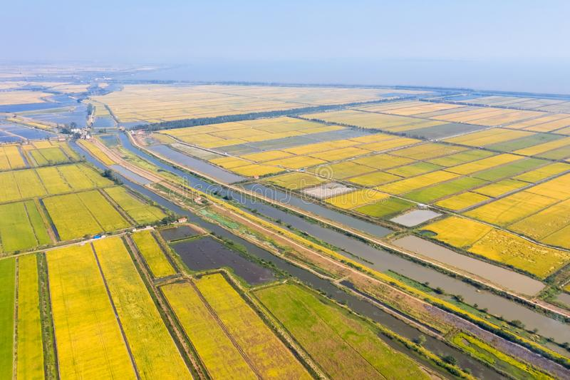 Reisfeld und See im Herbst stockfotografie