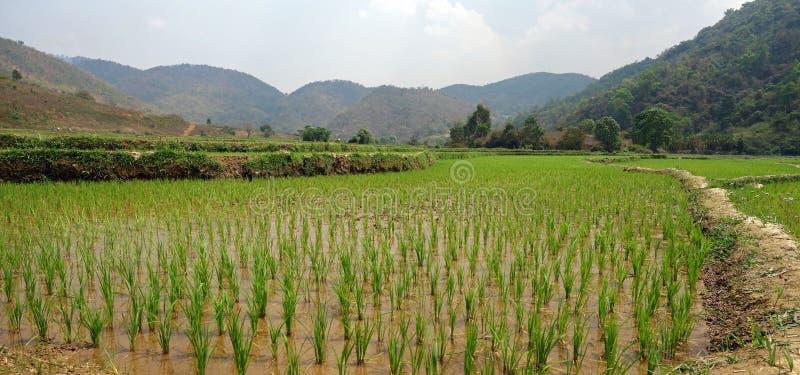 Reisfelder auf Myanmar lizenzfreies stockbild
