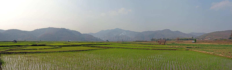 Reisfelder auf Myanmar stockfoto