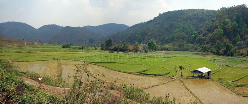 Reisfelder auf Myanmar lizenzfreie stockfotos
