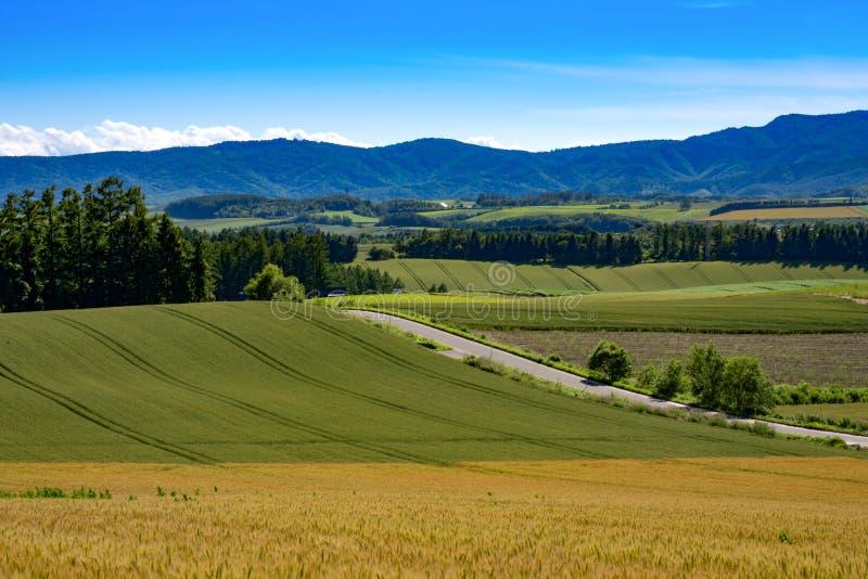 Reisfelder in Biei an der panoramischen Straßenansicht, Hokkaido, stockbilder