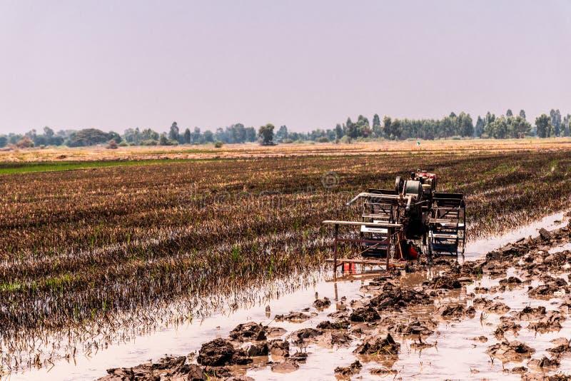 Reisfelder, die geerntet worden sind und f?r das folgende Reispflanzen sich vorbereiten stockbild
