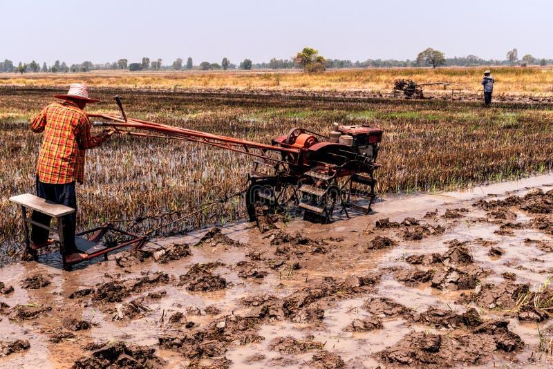 Reisfelder, die geerntet worden sind und f?r das folgende Reispflanzen sich vorbereiten stockbilder