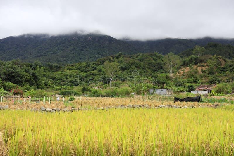 Reisfelder am Fuß des Berges, luftgetrockneter Ziegelstein rgb stockbild