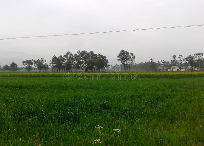 Reisfelder im chinesischen Dorf lizenzfreies stockfoto