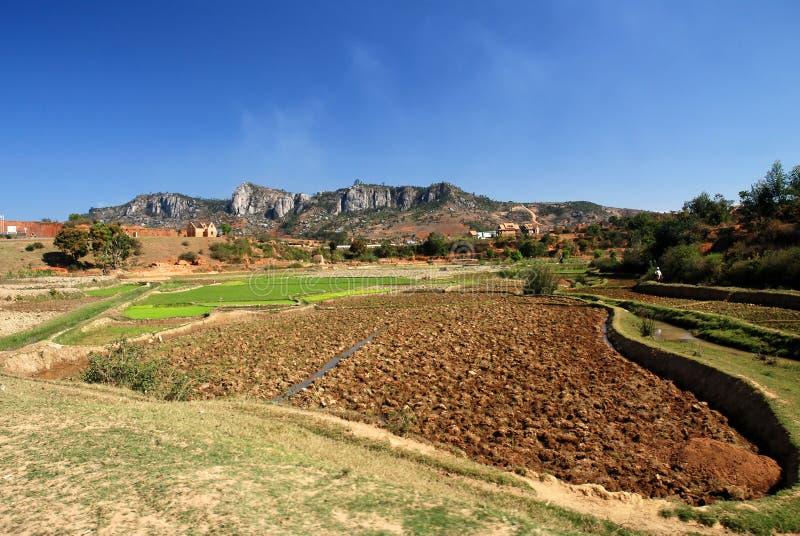 Reisfelder in Madagaskar stockfoto