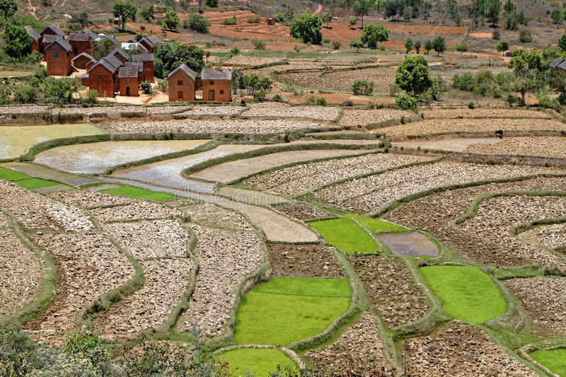 Reisfelder und -dorf in Madagaskar-Hochländern lizenzfreies stockfoto