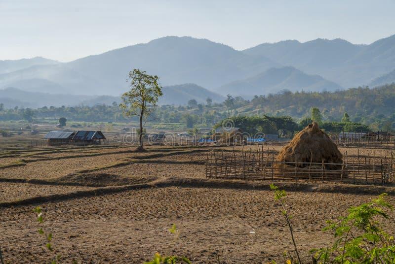 Reisfelder während der Trockenzeit, Pai, Thailand lizenzfreie stockfotografie