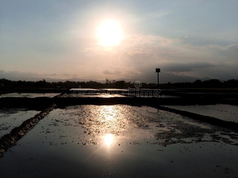 Reisfeldsonnenuntergang lizenzfreie stockfotografie