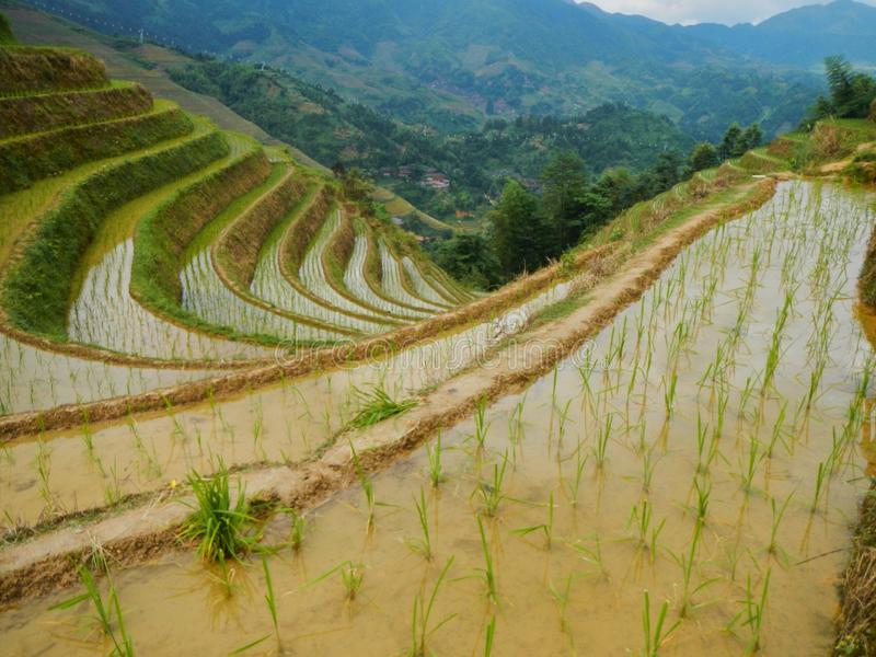 Reisfeldterrassen in Guilin in der Provinz von Guangxi, China lizenzfreie stockfotos