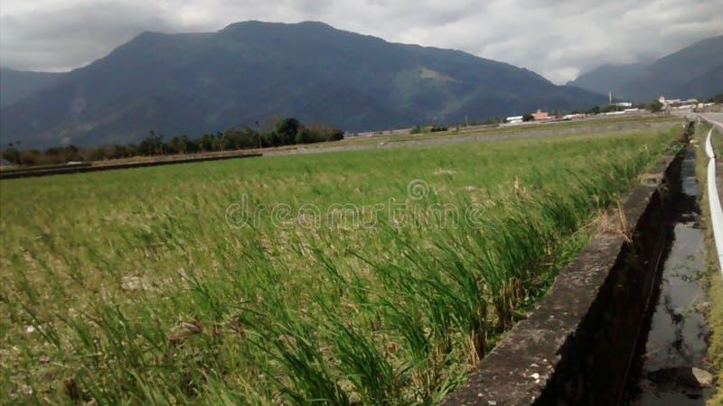 Reispaddylandschaft stockbild