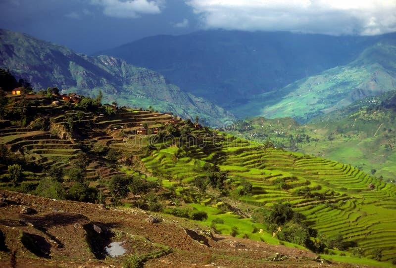 Reispaddys als Schichten terassenförmig angelegte Felder stockbilder