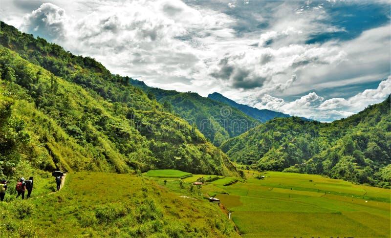 Reispaddys auf Wanderweg stockfotografie