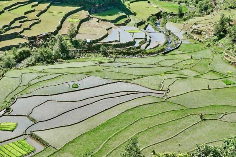Reispaddyterrasse fängt Philippinen auf lizenzfreie stockbilder