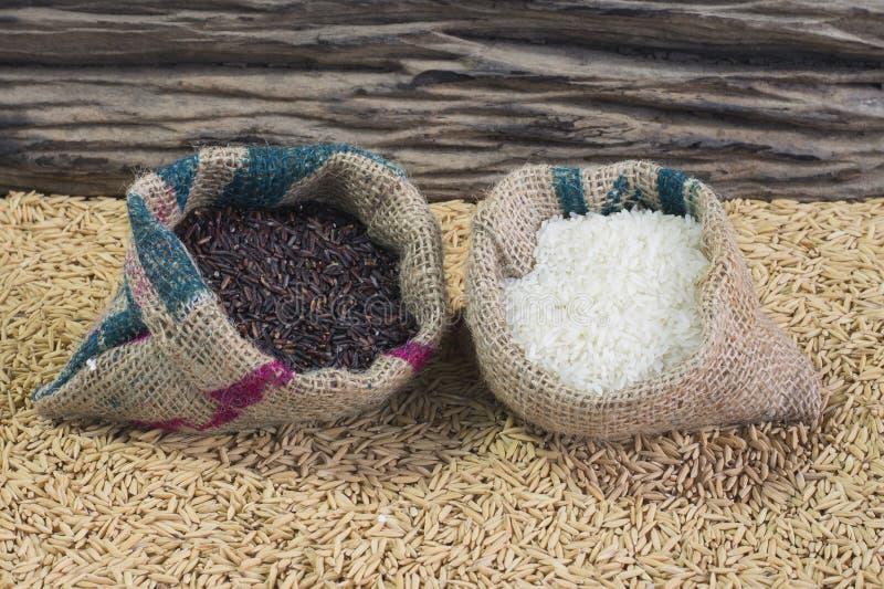 Reisstartwert für zufallsgenerator stockfoto