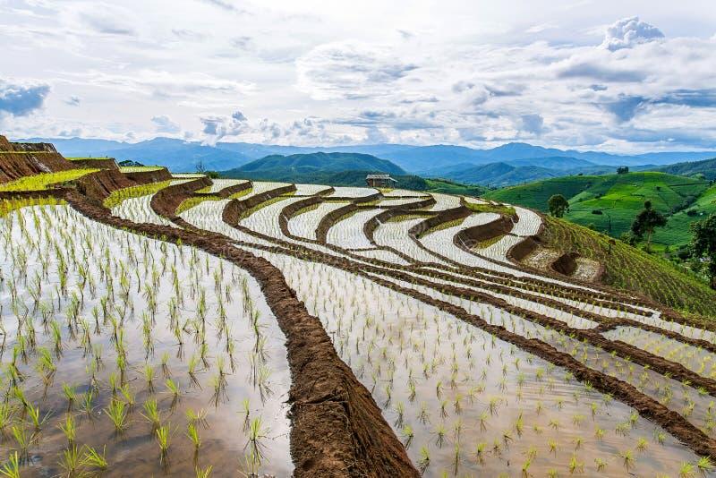 Reisterrasse und -berg an PA Bong Piang nahe Nationalpark Inthanon und Mae Chaem, Chiangmai, Thailand stockbilder