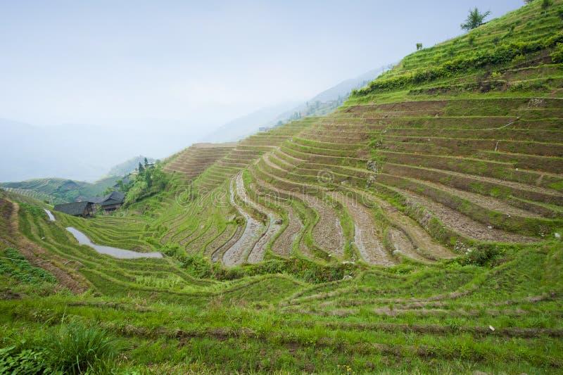 Reisterrassen in China stockfotografie