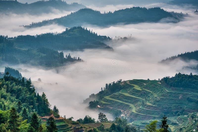 Reisterrassen am frühen Morgen eingehüllt in Nebel lizenzfreie stockbilder