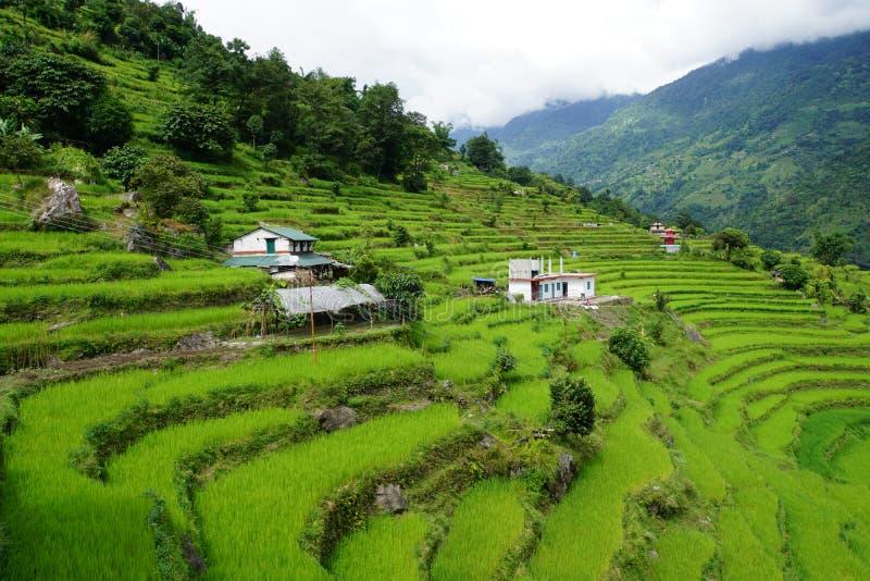 Reisterrassen Nepal stockfotos
