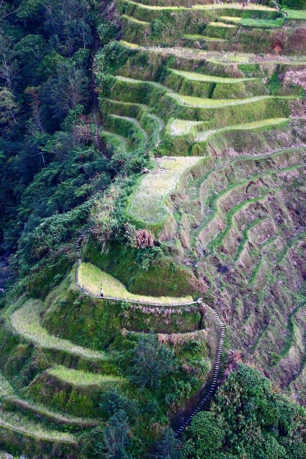 Reisterrassen, Philippinen lizenzfreie stockfotografie