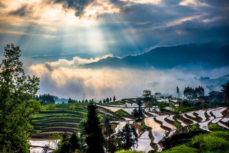 Reisterrassen und Beugungslicht stockfotos