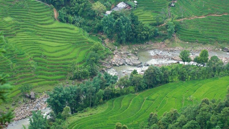 Reisterrassen und -fluß im Sapa Tal lizenzfreies stockbild