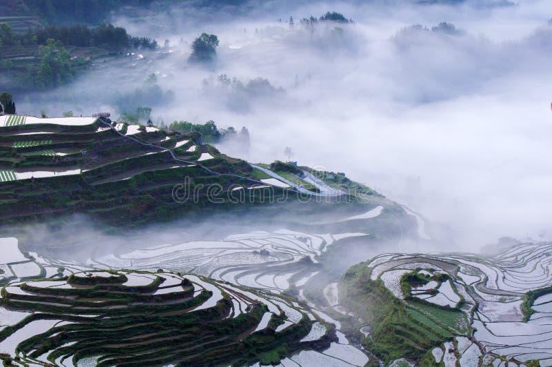 Reisterrassen und -nebel lizenzfreies stockfoto