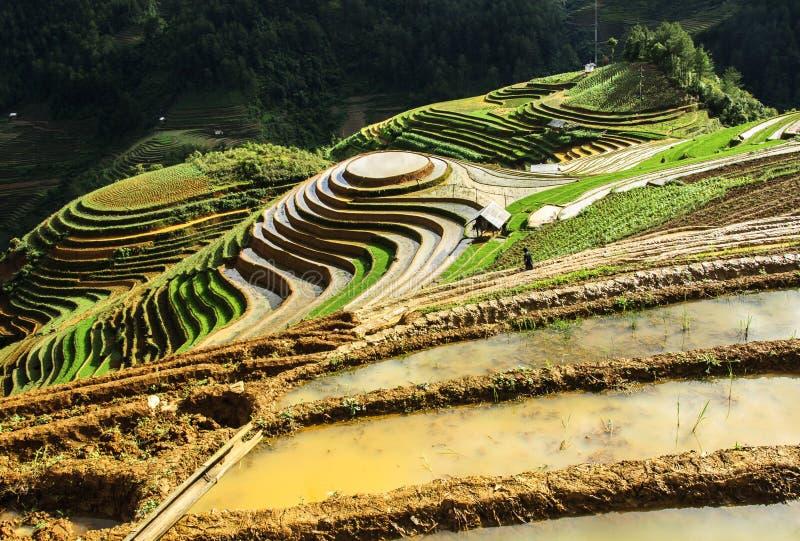 Reisterrassen in Vietnam stockfotos