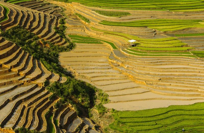 Reisterrassen in Vietnam lizenzfreies stockfoto