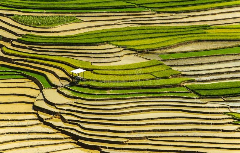 Reisterrassen in Vietnam stockbilder