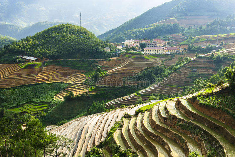 Reisterrassen in Vietnam stockfotografie