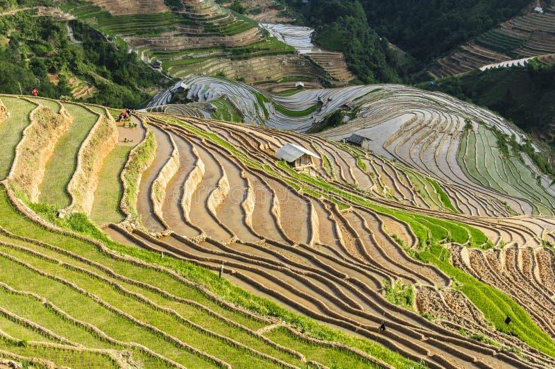 Reisterrassen in Vietnam stockbild