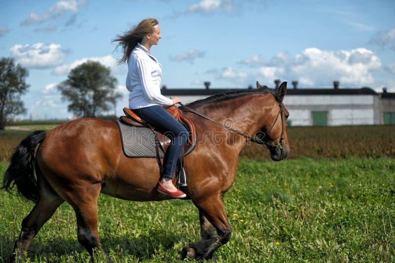 Reiten der jungen Frau auf einem braunen Pferd stockbild