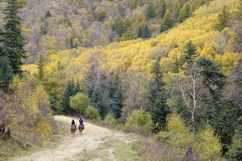 Reiten in Herbst lizenzfreie stockbilder