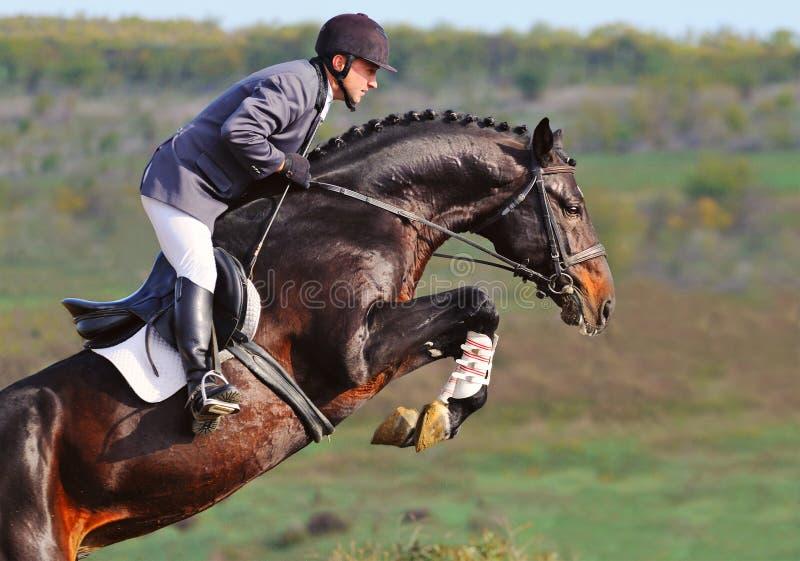 Reiter auf Schachtpferd in springender Show stockfotos