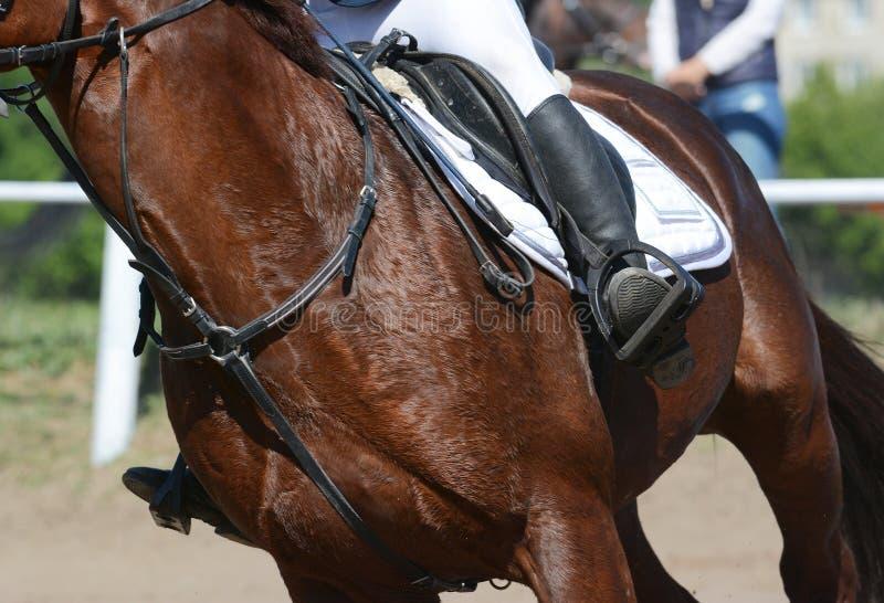 Reitersport ausführlich Sportpferd und -reiter auf Galopp lizenzfreies stockfoto