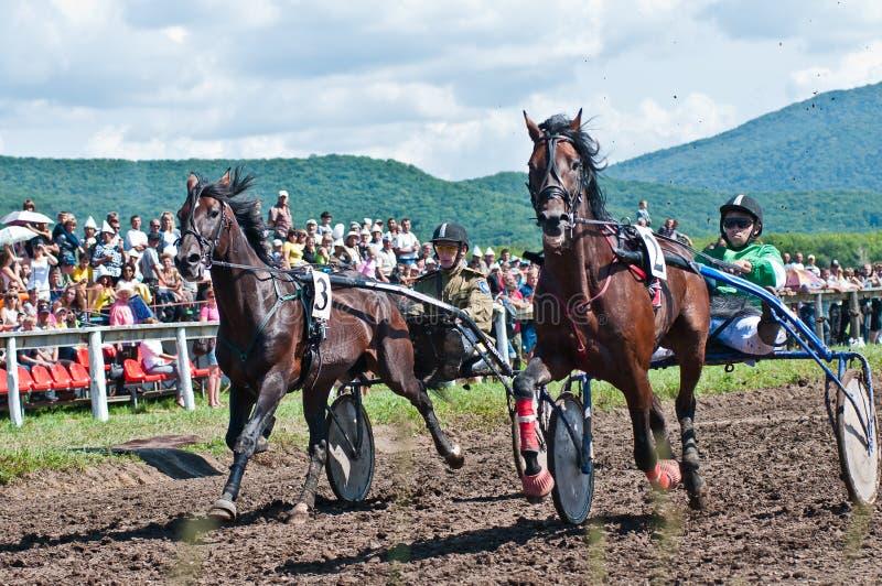 Reitersport. Hufrennen in der Arena lizenzfreie stockfotografie