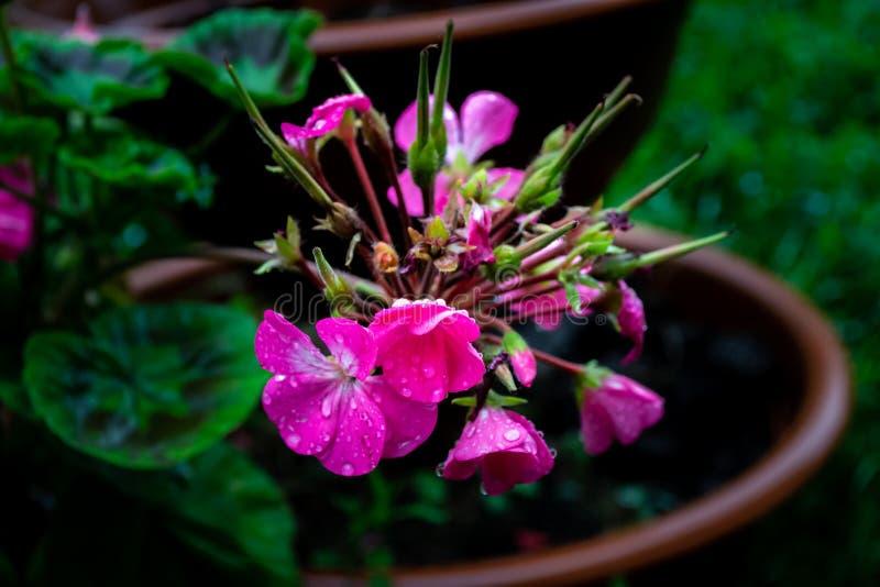 Reizend Kirschblumen lizenzfreies stockbild