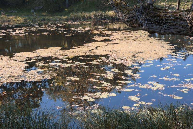 Reizend Teich in Wilanow Hauptstadt von Polen - Warschau lizenzfreies stockfoto