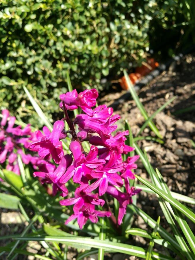 Reizende Blume in meinem Garten lizenzfreie stockfotos